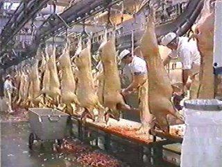 carne (11) ALIMENTACION COMIDA