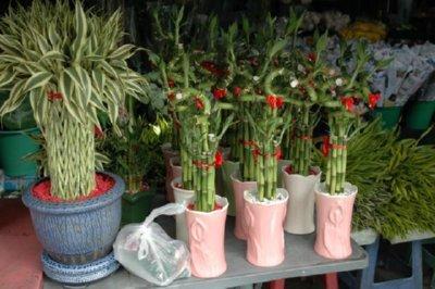 Plantas decorativas imagenes fotos establecimientos de for Plantas decorativas hidroponicas