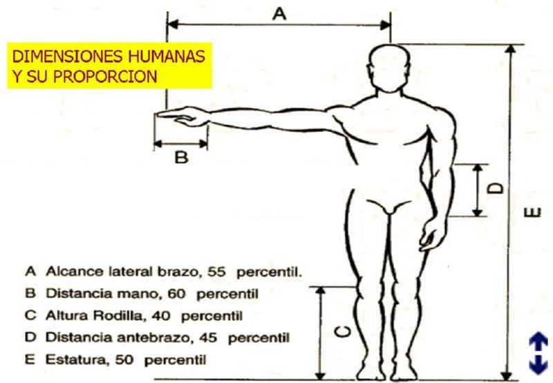 Noveno a tecnolog a de punta aspectos relacionados for Medidas antropometricas del cuerpo humano